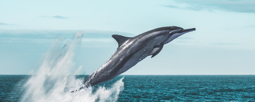 Tasmania backs Dolphin tungsten development