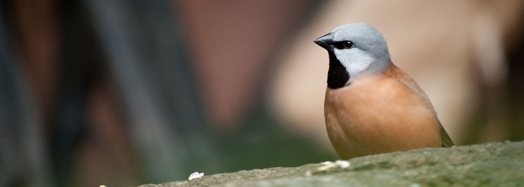 Adani's finch plan approved